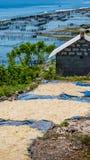Algal asciutto sulle piantagioni vicine a terra dell'alga - Nusa Penida, Bali, Indonesia Fotografia Stock Libera da Diritti