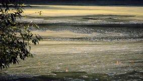 Algal blomvattenyttersida av floden och driva med flöde lager videofilmer