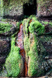 Algal bloom Stock Image