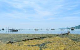 Algal bloom in a tropical ocean Royalty Free Stock Photo