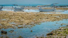 Algal cercano con marea baja de dos de Fisher Boats plantaciones de la alga marina - Nusa Penida, Bali, Indonesia Imágenes de archivo libres de regalías