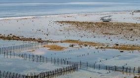 Algal cercano con marea baja de las plantaciones de la alga marina de Fisher Boat - Nusa Penida, Bali, Indonesia Imagenes de archivo