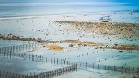 Algal cercano con marea baja de las plantaciones de la alga marina de Fisher Boat - Nusa Penida, Bali, Indonesia Fotografía de archivo