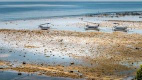 Algal cercano con marea baja de las plantaciones de la alga marina de Fisher Boats - Nusa Penida, Bali, Indonesia Foto de archivo libre de regalías