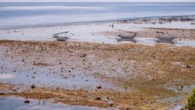 Algal cercano con marea baja de las plantaciones de la alga marina de Fisher Boats - Nusa Penida, Bali, Indonesia Imagen de archivo