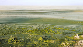 Algal kwiatu zanieczyszczonej wody zielony kolor w jeziorze Zdjęcia Stock