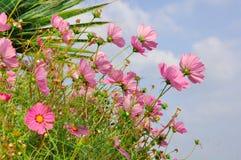 algarve海滩植物群拉各斯葡萄牙 免版税库存照片