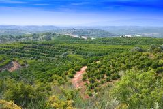 Algarvian Fruit Plantation Stock Images