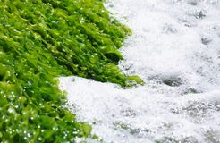 algas泡沫绿浪 免版税图库摄影