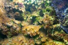 Algas Imagens de Stock Royalty Free