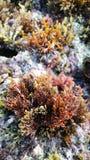 Algas coloridas Imágenes de archivo libres de regalías
