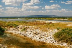 Algas coloridas en las orillas del lago Nakuru, Kenia fotografía de archivo libre de regalías