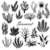 Algas do aquário Plantas subaquáticas, plantação do oceano Grupo isolado silhueta do preto da alga do vetor ilustração royalty free