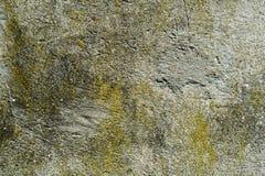 Algas e molde na parede do cimento de A Fotos de Stock