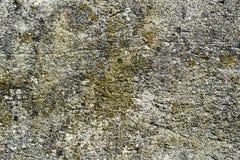 Algas e molde na parede do cimento de A Fotografia de Stock