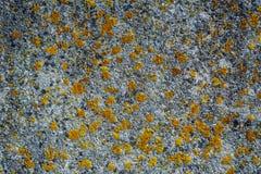 Algas e molde no muro de cimento de A Foto de Stock