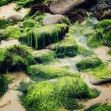 Algas e rochas verdes em Waterville, Kerry do condado - efeito do vintage Imagem de Stock