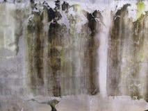 Algas em uma parede do cimento Imagem de Stock Royalty Free