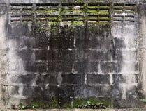 Algas em uma parede do cimento Foto de Stock Royalty Free