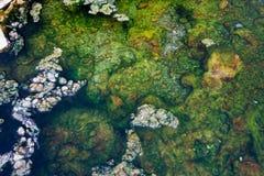 algas en aguas termales Imágenes de archivo libres de regalías