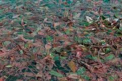 Algas en la charca Foto de archivo