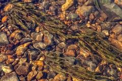 Algas en la parte inferior pedregosa del río en una corriente del agua con reflexiones de la luz del sol Fotos de archivo