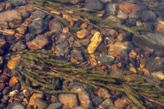 Algas en la parte inferior pedregosa del río en una corriente del agua con reflexiones de la luz del sol Imágenes de archivo libres de regalías