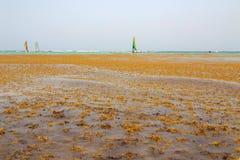 Algas en las playas fotos de archivo