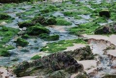 Algas en una playa Imágenes de archivo libres de regalías