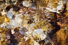Algas iluminadas por raios de sol Fotografia de Stock Royalty Free