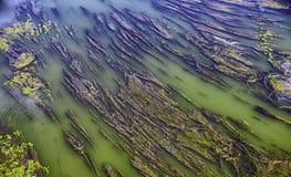 Algas largas en el agua verde del río Imagen de archivo libre de regalías