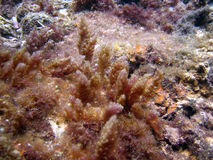 Algas marinas Imagen de archivo libre de regalías
