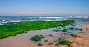 Algas marinas Imagenes de archivo