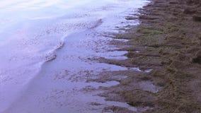 Algas marinas en la orilla del mar almacen de video