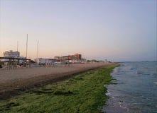 Algas marinas en la playa de Nazioni del delle de Lido, costa de mar Mediterráneo, Emilia Romagna, Italia foto de archivo