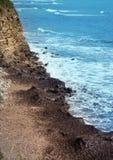 Algas marinhas nas rochas Fotos de Stock