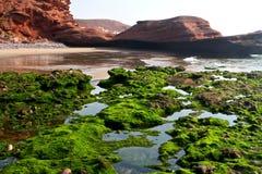 Algas na costa Imagens de Stock