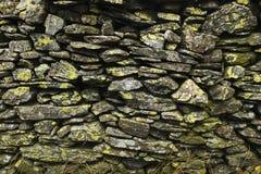 Algas na pedra 2 imagens de stock