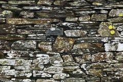 Algas na pedra 3 foto de stock royalty free