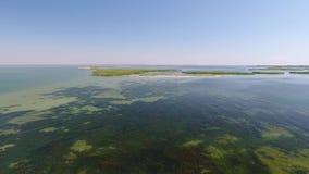 Algas no mar O voo e alisa a elevação à superfície da àgua filme