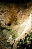 Algas på flowstone i en grotta arkivfoton