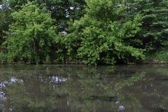 Algas que crecen en el río de movimiento lento Foto de archivo libre de regalías
