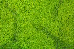 Algas que flutuam na lagoa da natureza Imagem de Stock Royalty Free