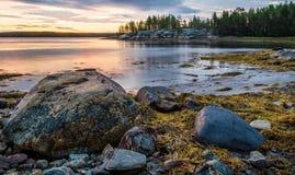 Algas, rochas e árvores na praia Fotos de Stock Royalty Free