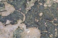 Algas secadas no assoalho Fotos de Stock