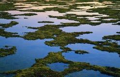 Algas sobre el agua fotos de archivo