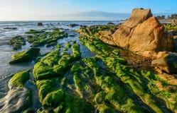 Algas verdes em uma rocha no meio do mar foto de stock