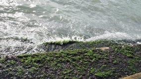 Algas verdes en escaleras de piedra en la costa del mar o del océano almacen de metraje de vídeo
