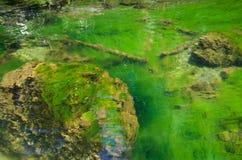 Algas verdes esmeralda en un río Tidal foto de archivo
