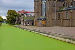 Algas verdes no canal no tempo de mola Foto de Stock Royalty Free